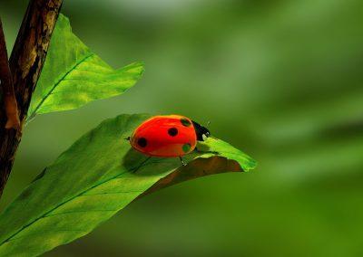 ladybird-163480_960_720
